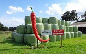 Voor de Proefeet in Enschede heeft mondice banners en geveldoeken geleverd.